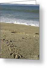 Trail To The Beach Greeting Card
