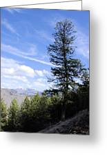 Trail Tree View Greeting Card