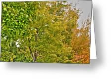 Transition Of Autumn Color Greeting Card