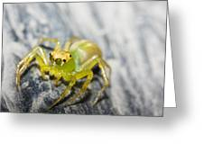 Translucent Arachnid Greeting Card