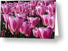 A Field Of Translucent Tulips Greeting Card