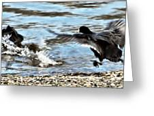 Travelin Coots Greeting Card