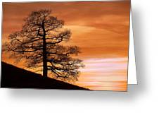 Tree Against A Sunset Sky Greeting Card