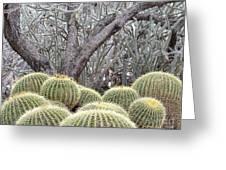 Tree And Barrel Cactus Greeting Card