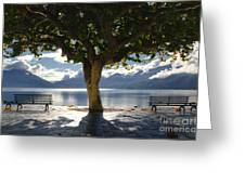 Tree And Benches Greeting Card