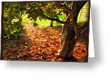 Tree And Shadows Greeting Card