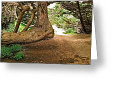 Tree And Trail Greeting Card