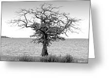 Tree And Water Greeting Card