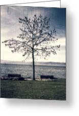 tree at lake Constance Greeting Card by Joana Kruse