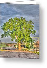 Tree At Newport On The Levee Greeting Card