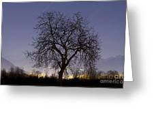 Tree At Night With Stars Trails Greeting Card