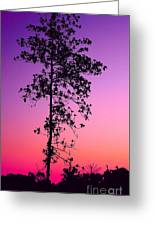 Tree At Twilight Greeting Card