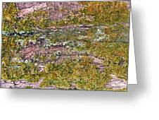 Tree Bark Moss Greeting Card