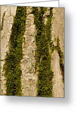 Tree Bark Mossy 4 C Greeting Card