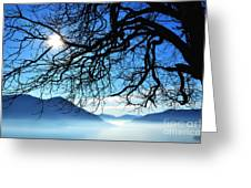 Tree Branches And Sun Greeting Card