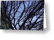 Tree Branches Greeting Card