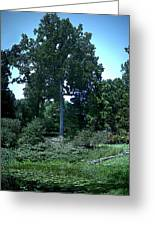 Tree By A Pond Greeting Card