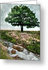 Tree By Stream Greeting Card