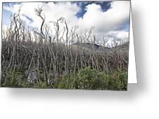 Tree Cemetery Greeting Card