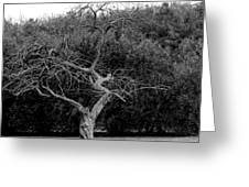 Tree Dancer Greeting Card