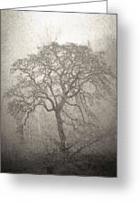 Tree Fog Greeting Card
