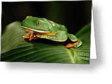 Tree Frog 1 Greeting Card