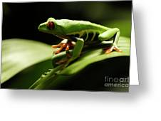 Tree Frog 13 Greeting Card