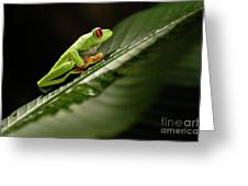 Tree Frog 2 Greeting Card