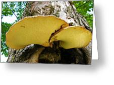 Tree Fungus 2 Greeting Card