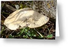 Tree Fungus Greeting Card