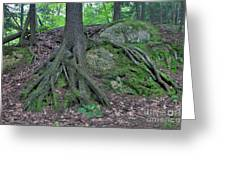 Tree Growing Over A Rock Greeting Card