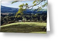 Tree In A Field, Great Sugar Loaf Greeting Card
