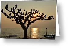 Tree In A Foggy Sunset Greeting Card