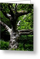 Tree In Denmark Greeting Card