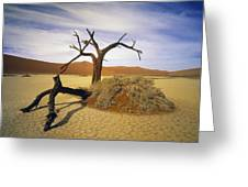 Tree In Desert Greeting Card