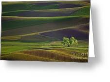 Tree In The Palouse Greeting Card