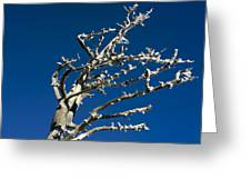 Tree In Winter Against A Blue Sky Greeting Card
