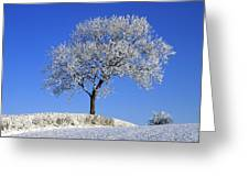 Tree In Winter, Co Down, Ireland Greeting Card