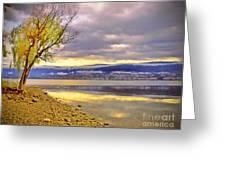 Tree Light Greeting Card