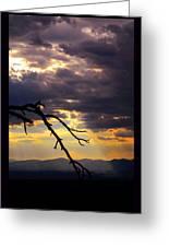 Tree Limb In Sunset Greeting Card