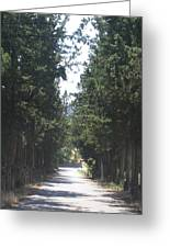 Tree Lined Street Greeting Card