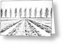 Tree Lines Greeting Card