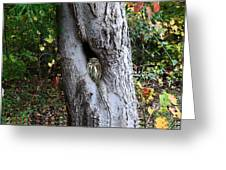 Tree Nook With Owl Greeting Card