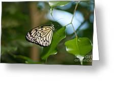 Tree Nymph Greeting Card