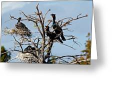 Tree Of Florida Cormorants Greeting Card