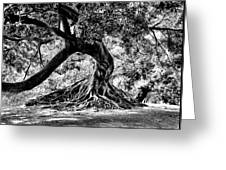 Tree Of Life - Bw Greeting Card