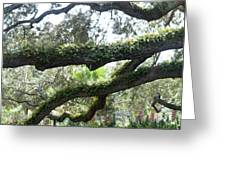 Tree Of Life Panorama Greeting Card