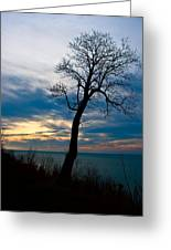 Tree Of Peace Greeting Card