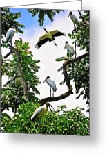 Tree Of Storks  Greeting Card