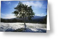 Tree On A Snow Covered Landscape Greeting Card